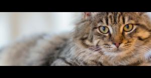 Kedi Maması Markaları