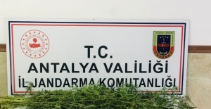 Manavgat'ta uyuşturucu operasyonu: 1 gözaltı
