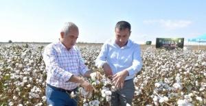 Tarsus Belediyesi destek verdi, yerli pamuk hasadı yapıldı