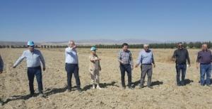 Antalya'da Karakılçık buğdayı üretilmeye başlandı