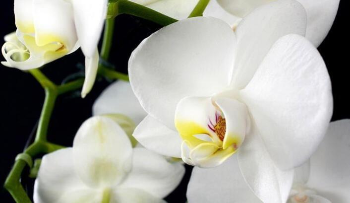 Orkideler Hakkında Bilinmeyenler