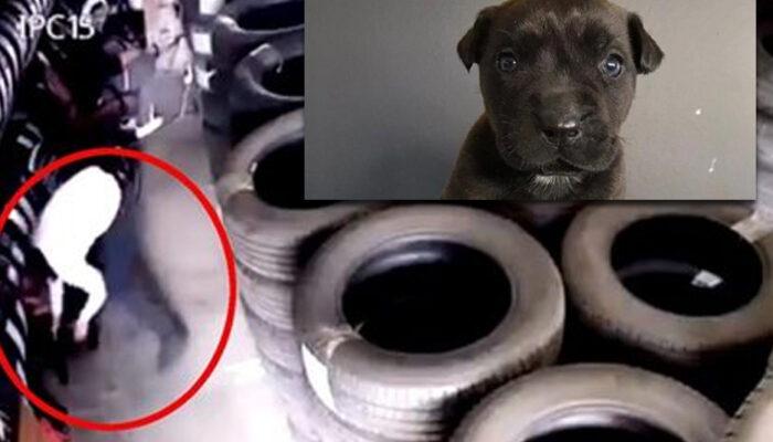 3 aylık yavru köpeği vahşice öldüren kişi yakalandı! İfadesi ortaya çıktı