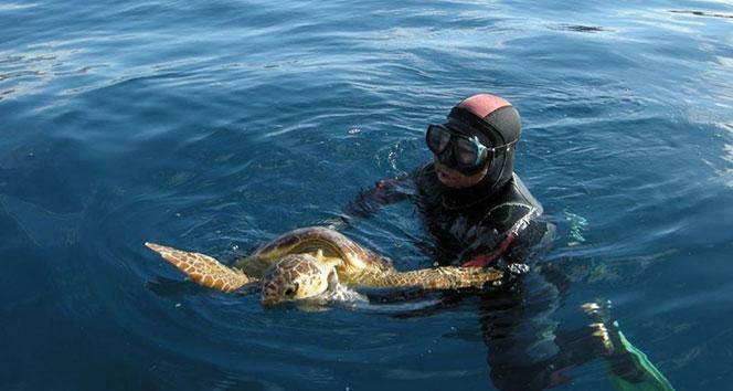 9 yıl önce kurtarılan kaplumbağa bu kez başaramadı