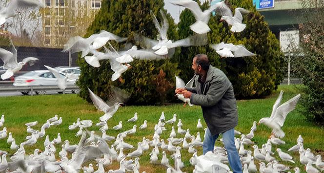 Bakırköy'de her gün yüzlerce martıyı elleriyle besliyor