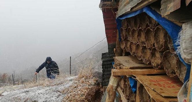 Bal arıları kış uykusuna yattı