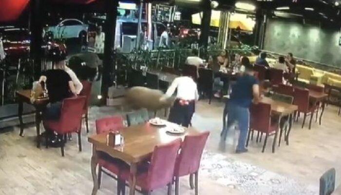 Bartın'da kurbanlık koç restorana böyle girdi