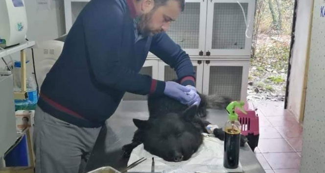 Boynuna lastik bağlanan köpek ölüme terk edildi