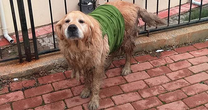 Çocuklar sokak köpeğine üşümesin diye tişört giydirdi
