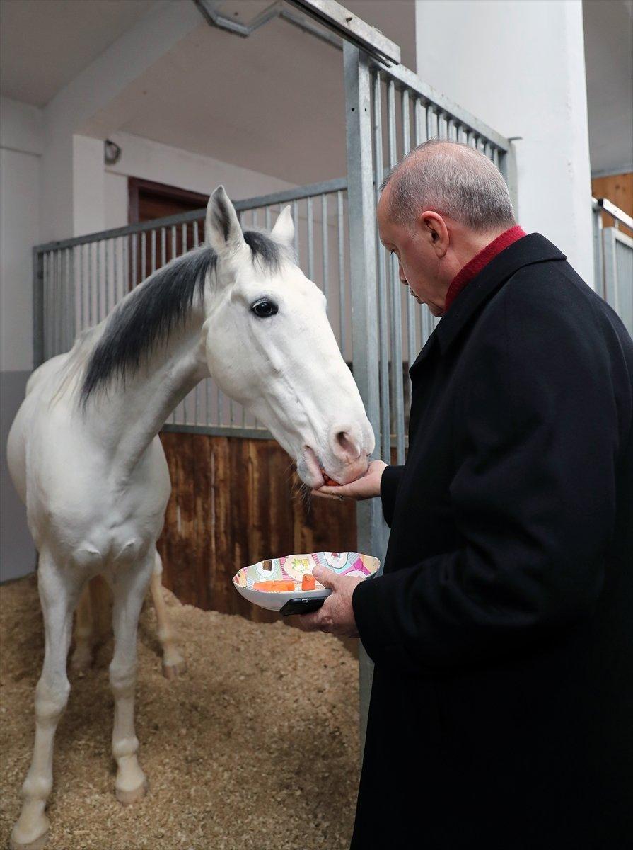 Cumhurbaşkanı Erdoğan, atı elleriyle besledi #1