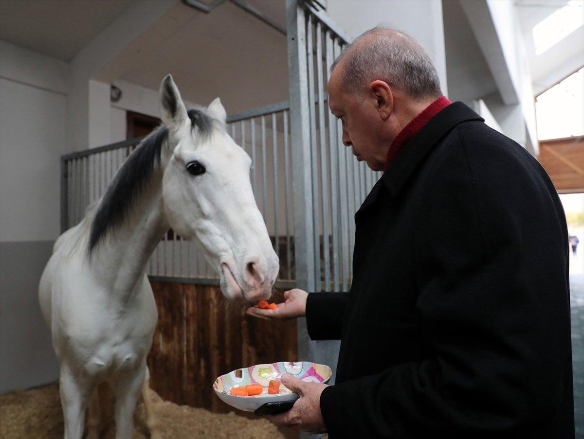 Cumhurbaşkanı Erdoğan, atı elleriyle besledi #2