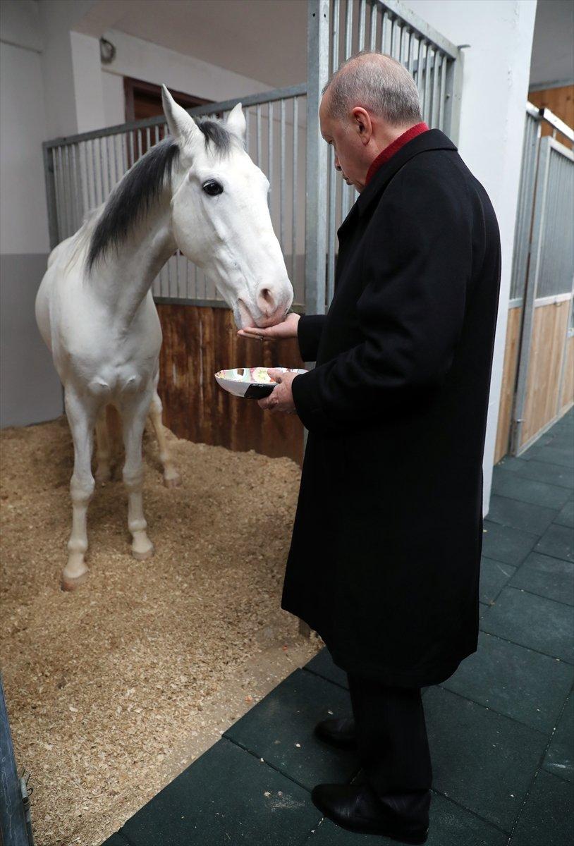 Cumhurbaşkanı Erdoğan, atı elleriyle besledi #3