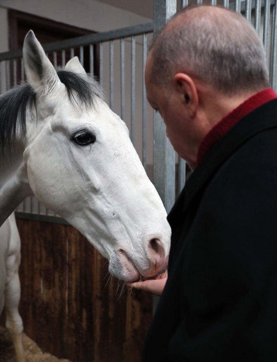 Cumhurbaşkanı Erdoğan, atı elleriyle besledi #4