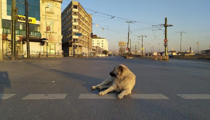 İstanbul'da bu sabah! Sokaklar, caddeler onlara kaldı