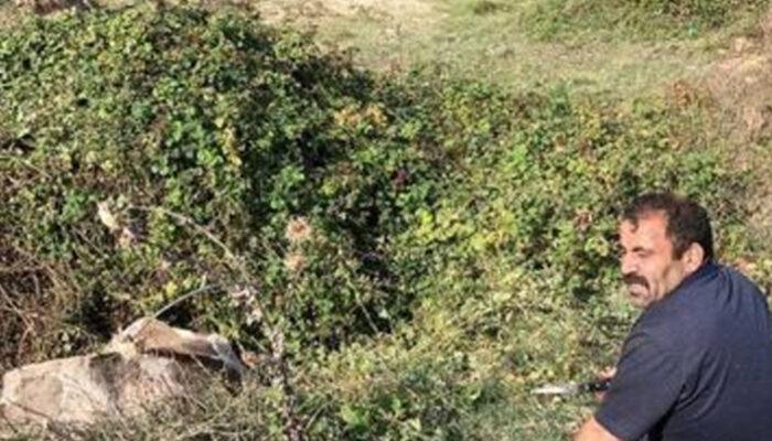 İstanbul'da ineği 'sucuk' olmaktan itfaiye kurtardı