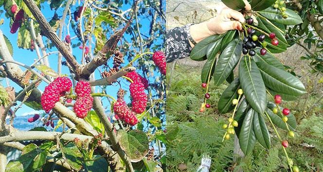 Meyveler yalancı bahara aldandı