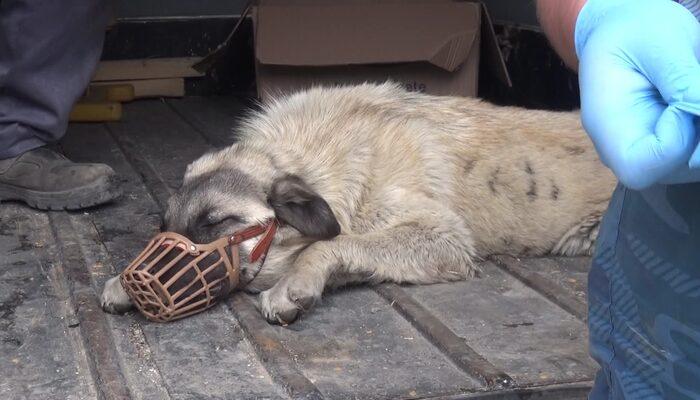 Otomobilin çarptığı köpek, tedaviye alındı