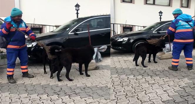 Temizlik işçisinin sokak köpeklerine süpürgeyle masaj yaptığı ısıtan görüntüler kamerada