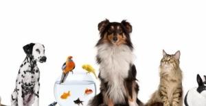 Evcil Hayvanların Eğlenceli Dünyası