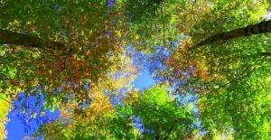 Dumanlı Yaylası'nda renk cümbüşü