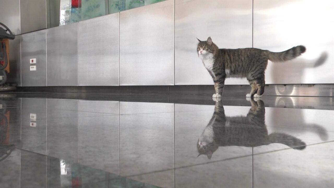 CHP'nin kedisi Şero iyileşti