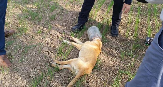 Kafası bidona sıkışan köpeği belediye ekipleri kurtardı