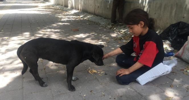 Kağıtçı küçük kız yiyeceğini sokak köpeğiyle paylaştı