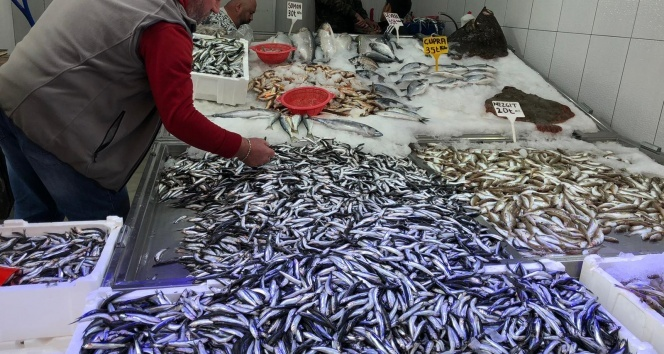 Karadeniz'de hamsi yeniden yükselişte
