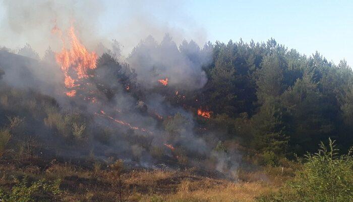 Kastamonu Cide'de orman yangını! Rüzgar nedeniyle kontrol altına alınamıyor