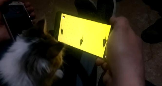 Kedinin cep telefonundan fare ile oyunu kahkahaya boğdu