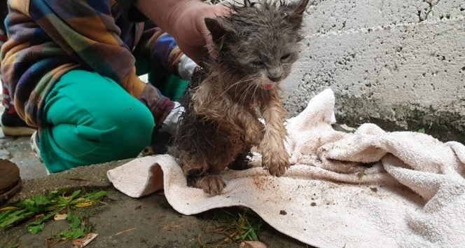 Yağmur suyu kanalına sıkışan yavru kediyi itfaiye kurtardı