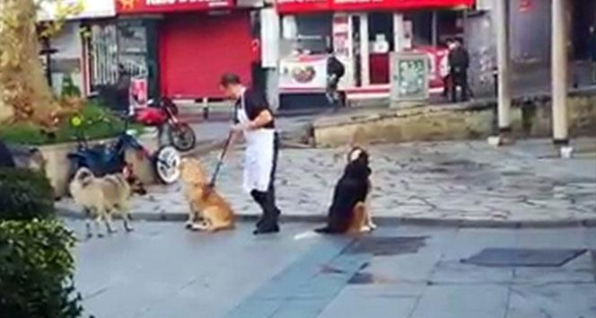Vatandaşın süpürge ile masaj yaptığı köpeklerin iç ısıtan halleri kamerada