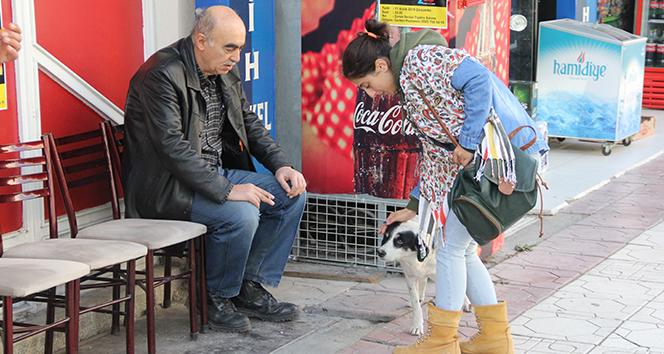 Vefakar köpek 6 aydır sahibinin çıkmasını bekliyor