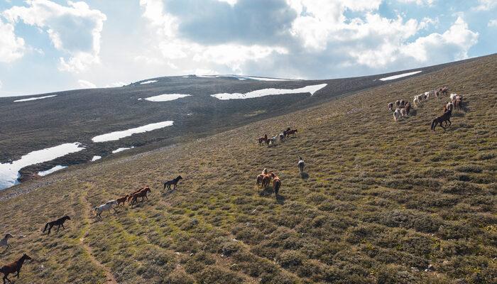 Yellibel Yaylası'ndaki yılkı atlarının hayran bırakan görüntüleri